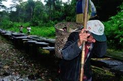 Amazonas - Peru Royaltyfri Fotografi