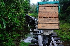 Amazonas - Peru Royaltyfri Foto