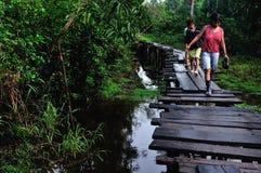 Amazonas - Peru Arkivbild