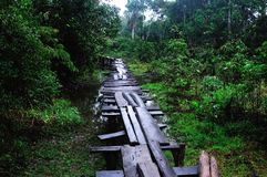 Amazonas - Peru Stockfoto