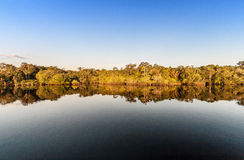 Amazonas reflexion Stock Photography