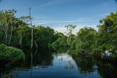 Amazonas-Regenwald Stockfoto