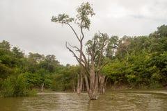 Amazonas-Regenwald Lizenzfreies Stockbild