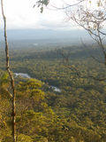 Amazonas-Regenwald-Ansicht stockfotografie