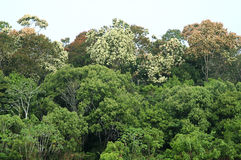amazonasskogregn Arkivbilder