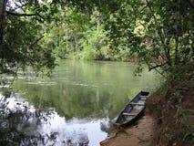 Amazonaswildernis en rivier Stock Afbeeldingen