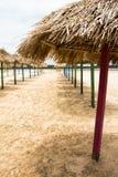 Amazone Sunbrellas Photo stock
