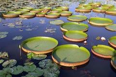 Amazonië Stock Foto