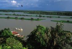 Amazonië Basin.Brazil Stock Foto's
