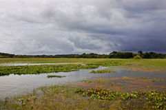 Amazonië - Curiau APA Royalty-vrije Stock Foto's