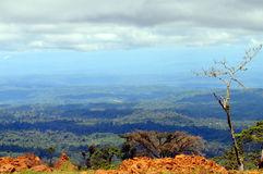 Amazonia. Panorama view of the tropical rainforest Royalty Free Stock Image