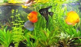 Amazonian aquarium Stock Image