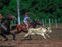 Amazonian cowboy Royalty Free Stock Photo