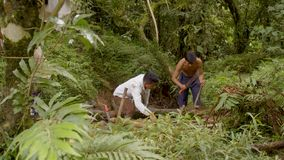 Men working in forest. Amazonian deforestation, building and testing a raft in Ecuador stock video footage
