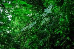 Amazonian djungel Fotografering för Bildbyråer