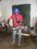 Amazonian fisk royaltyfri fotografi