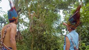 Amazonian Indigenous Chief Pointing Out An Ayahuasca Plant. In Ecuador stock video footage