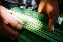 Amazonian indisk stammedlem som samlar växter för garnering och att måla royaltyfri bild