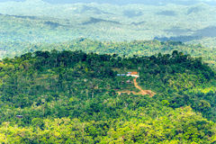 Amazonian Jungle Aerial View Stock Photo