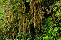 Amazonian jungle Royalty Free Stock Photo