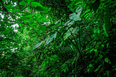 Amazonian  jungle Stock Image