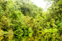 Amazonian Jungle Theme Stock Images