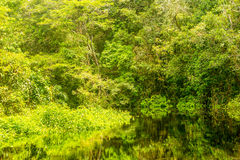 Amazonian Jungle Vegetation Stock Image