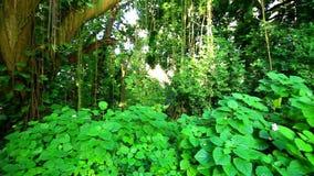 Amazonian rainforest, Brazil. Amazonian rainforest near Manaus, Brazil stock video footage