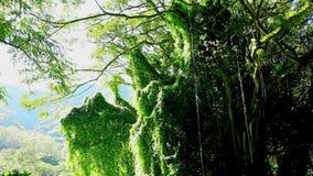 Amazonian rainforest, Brazil. Amazonian rainforest near Manaus, Brazil stock video