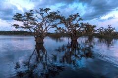 Amazonian rainforest. Cuyabeno. Ecu. Amazonian rainforest. Laguna Grande, National Park Cuyabeno. Ecuador Royalty Free Stock Photo