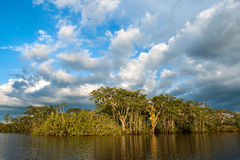 Amazonian rainforest. Laguna Grande, National Park Cuyabeno. Ecu Stock Photos