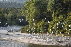 Amazonian rainforest. Misahualli River. Ecuador. Amazonian rainforest. Misahualli River. Napo province, Ecuador Stock Photography