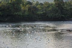 Amazonian rainforest. Misahualli River. Ecuador. Amazonian rainforest. Misahualli River. Napo province, Ecuador Royalty Free Stock Images