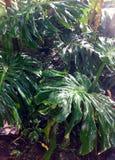 Amazonian zieleń liście Zdjęcia Stock