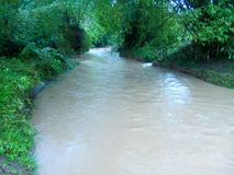 Amazonka brzeg rzeki Fotografia Stock