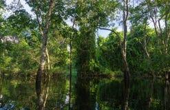 Amazonka tropikalny las deszczowy Zdjęcia Stock