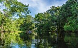 Amazonka tropikalny las deszczowy Fotografia Stock