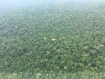 Amazonka tropikalny las deszczowy Zdjęcia Royalty Free