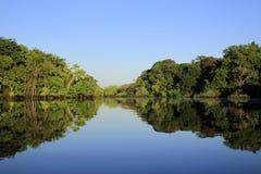 Amazonka tropikalny las deszczowy fotografia royalty free