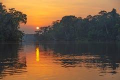 Amazonka tropikalny las deszczowy przy zmierzchem, Yasuni park narodowy, Ekwador zdjęcie stock
