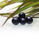 Amazonki acai owoc zdjęcie royalty free