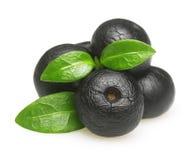 Amazonki acai owoc z liściem odizolowywającym obraz royalty free