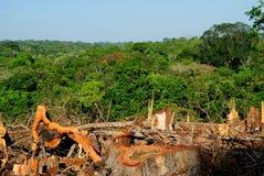 Amazonki desflorestation obrazy stock