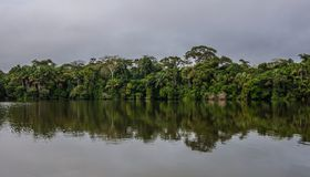 Amazonki dżungla Zdjęcia Royalty Free