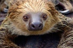 Amazonki zwierzę zdjęcia stock