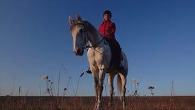 Amazzone su un cavallo bianco nei supporti del campo ed ammirare la vista Movimento lento stock footage