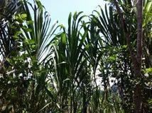 Amazzonia del Perù Fotografie Stock Libere da Diritti