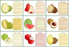 Ambarella Chompoo Sugar Apple Posters Set Vector illustration stock
