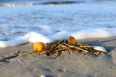 Amber στην παραλία Στοκ φωτογραφία με δικαίωμα ελεύθερης χρήσης