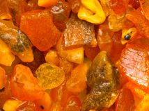 Amber. Background - Natural beauty of baltic amber Royalty Free Stock Images